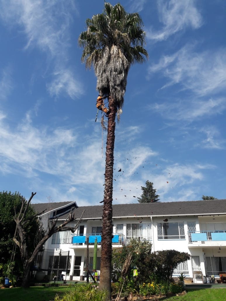 Are you afraid of heights, dont worry your professional and insured tree feller is just a phone call away