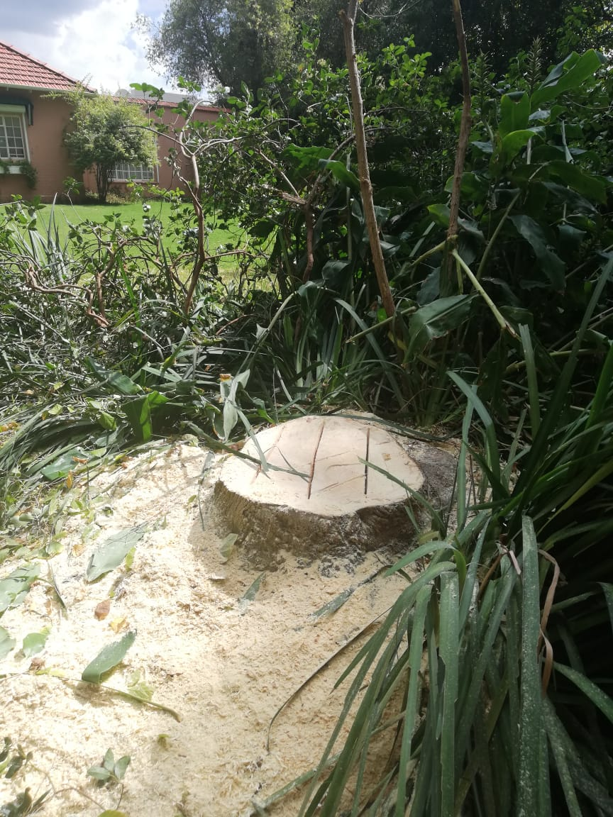 Stump removal in Roodepoort can be done on any day of the week. Call us to remove your stumps