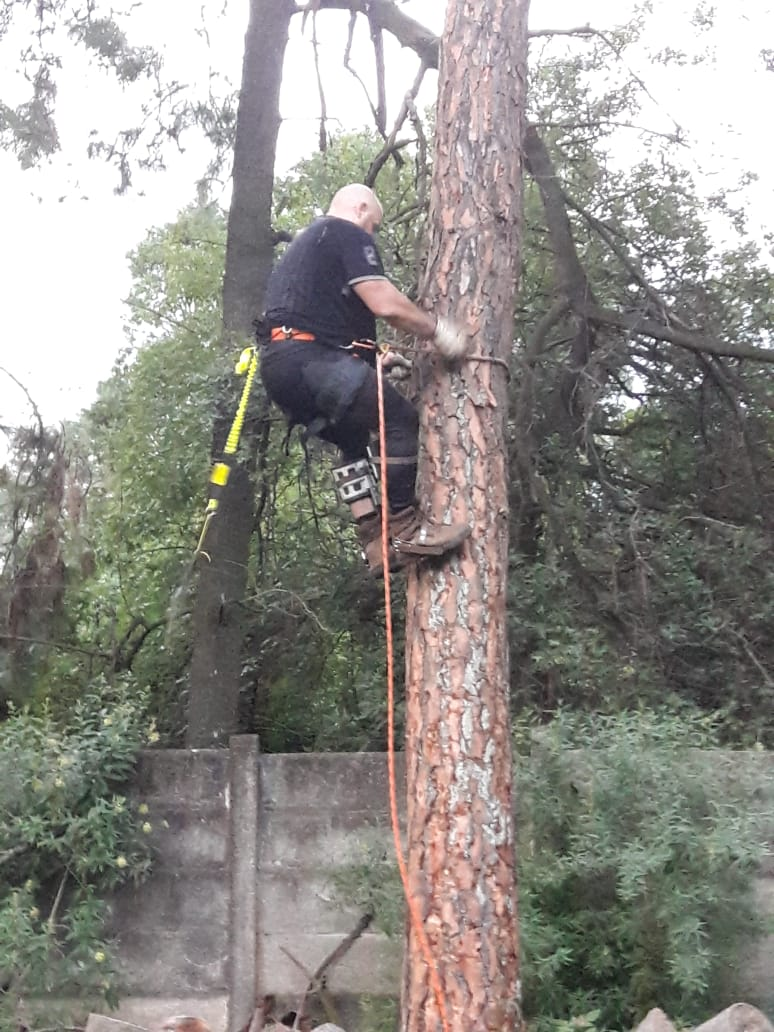 Tree Felling Roodepoort fully insured and owner always on site, dont try this by yourself