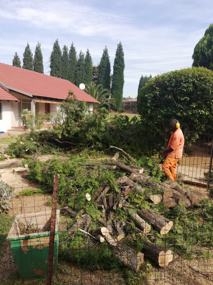 Tree Felling Roodepoort made easy. We remove all the wood and leave your spot even better than before