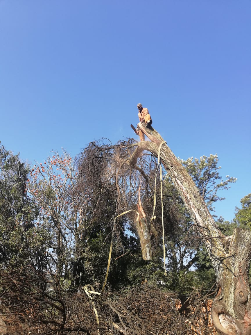 A tree feller in Roodepoort is your best bet when it comes to tree felling and tree removal. it can be dangerous and so only use a professional